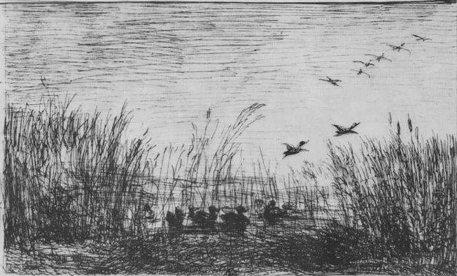 Charles-Francois Daubigny. Ducks in the swamp