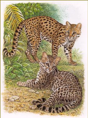 Роберт Даллет. Тигровый кот