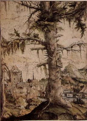 Albrecht Altdorfer. Small spruce