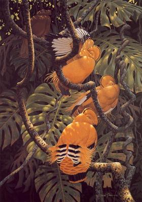 Ричард Слоан. Яркие тропические птицы