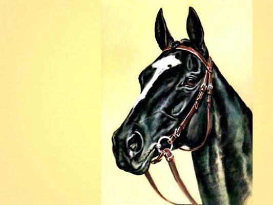Дональд Шварц. Лошадь 12