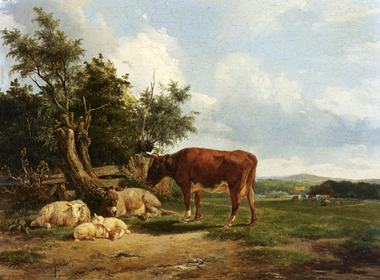 Ден Симон ван Берг. Крупный рогатый скот