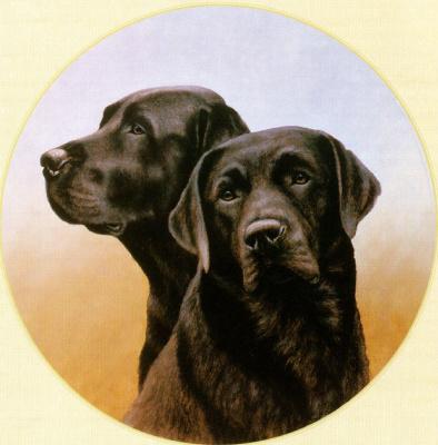 Найджел и Даниэль Кевин Хемминг. Собаки