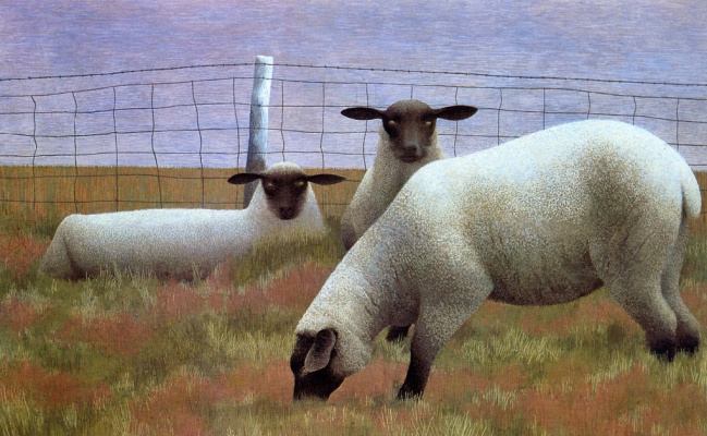 Alex Colville. Three sheep