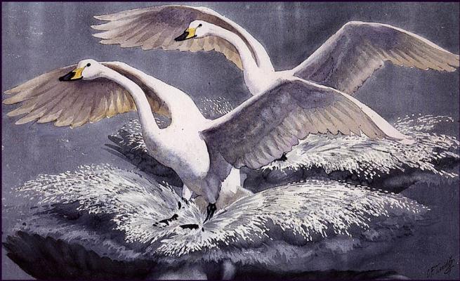 Чарльз Танниклифф. Лебединое приземление