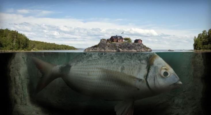 Eric Johansson. Fish island