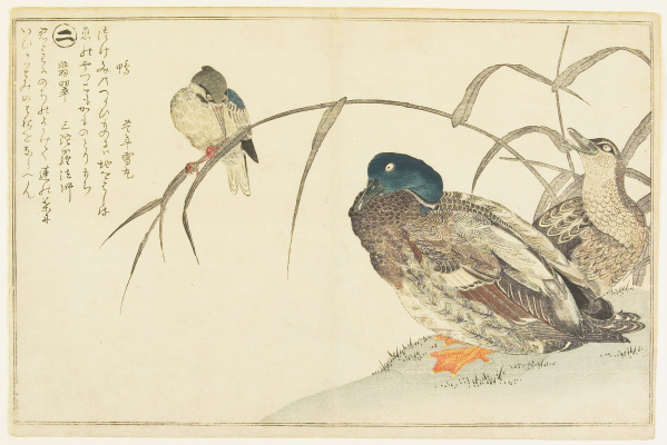Kitagawa Utamaro. Wild duck and kingfisher