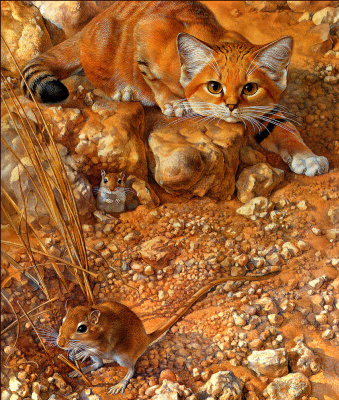 Питер Уорнер. Песчаный кот