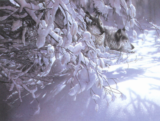 Коллин Богл. Волки и снег