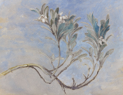 John Ruskin. A branch of myrtle tree in spring