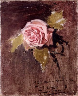 Игнасио Пиназо Камарленч. Одна розовая роза