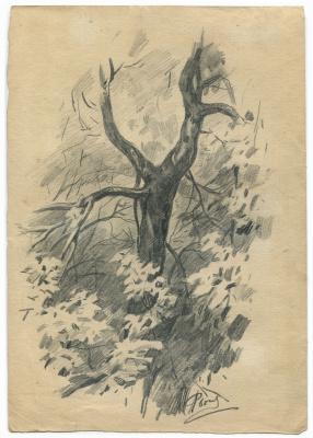 Alexandrovich Rudolf Pavlov. Tree sketch