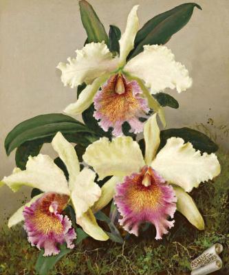 Лев Смарагдович Чистовский. Орхидеи.
