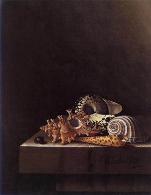 Адриан Коорт (Коорте). Натюрморт с раковинами