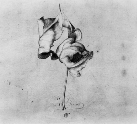 Фердинанд Оливье. Увядший лист