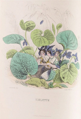 "Jean Inias Isidore (Gerard) Granville. Violets. The series ""Animate Flowers"""