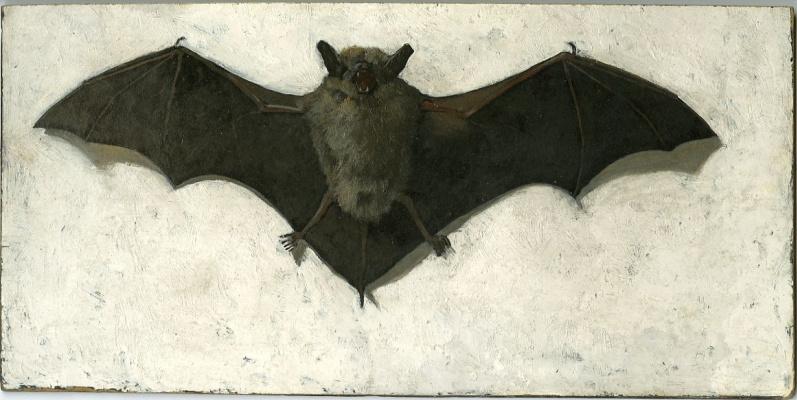 Maxfield Parrish. Bat