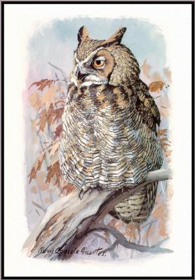 Луи Агассис. Большая рогатая сова