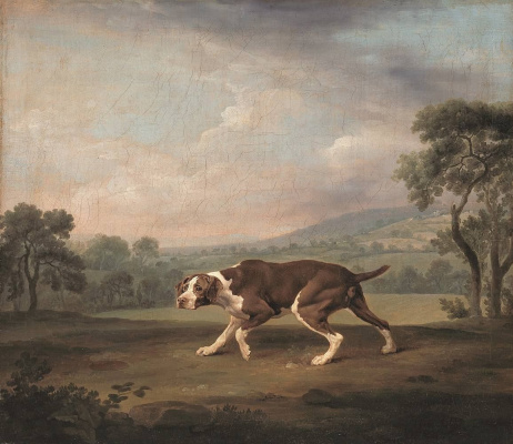 George Stubbs. Spanish pointer