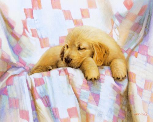 Nancy Noel. Golden puppy