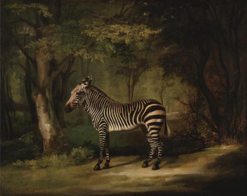 George Stubbs. Zebra