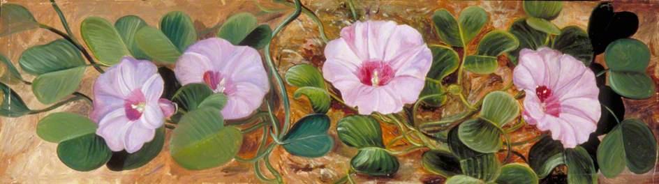 Marianna North. Flowers sandy tropical coast