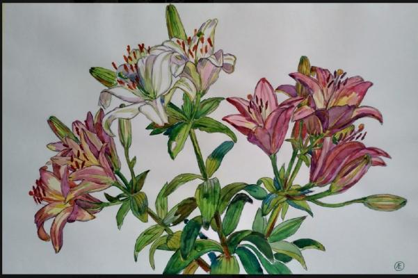 Lilia Georgievna Evsyukova. Marlene (Asiatic Lily)