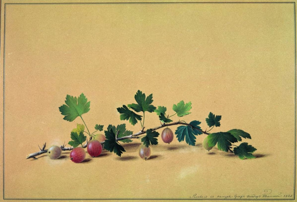 Fedor Petrovich Tolstoy. The branch of gooseberry