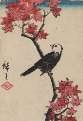 Утагава Хиросигэ. Самец японского бурого бюльбюля на ветке клена