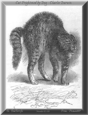 Дарвин. Кот