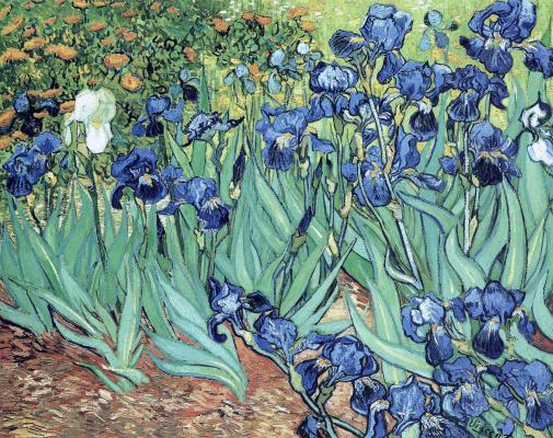 Vincent van Gogh. Irises