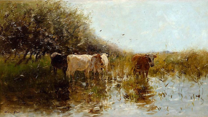 Cows in the Reeds