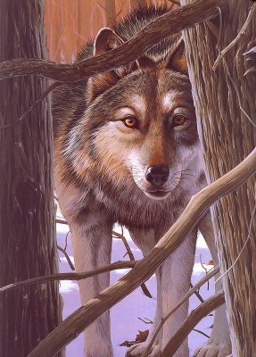 Род Лоеренс. Волк в лесу