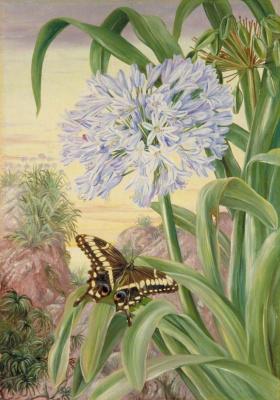 Марианна Норт. Бабочка и голубая лилия, Натал