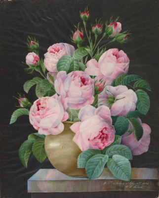 Pierre-Joseph Redoute. Pink roses in a vase