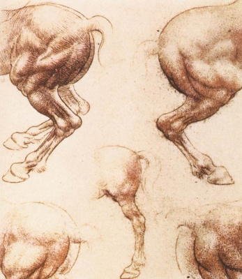 Leonardo da Vinci. Sketches of horses