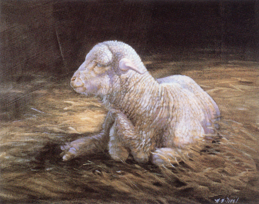 Nancy Noel. Lamb