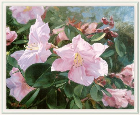 Марк Вебер. Розовый цвет
