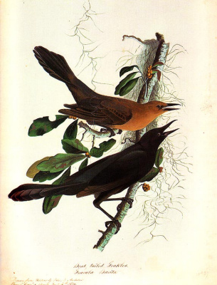 John James Audubon. Two birds on a branch