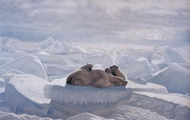 Лоренцо Фрачетти. Отдых на льдине
