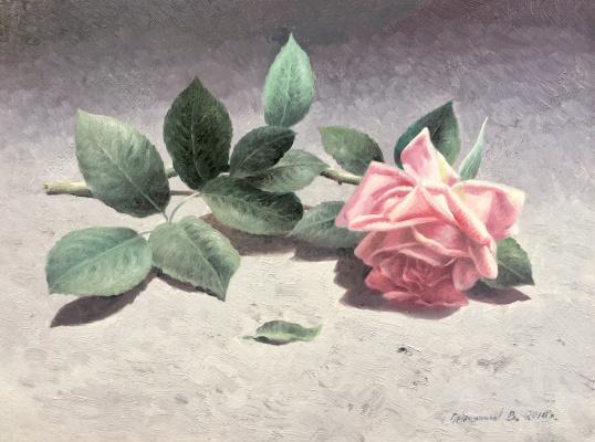 Vasily Ivanovich Gribennikov. Rose flower