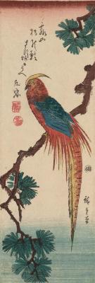 Utagawa Hiroshige. Golden pheasant on a pine branch