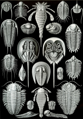 "Ernst Heinrich Haeckel. Aspidonia. ""The beauty of form in nature"""