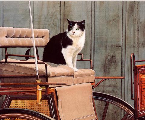 Дональд Паттерсон. Кот