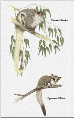 Марион Уэстмакотт. Австралийские млекопитающие 25