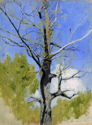 Isaac Levitan. The trunk of a blossoming oak