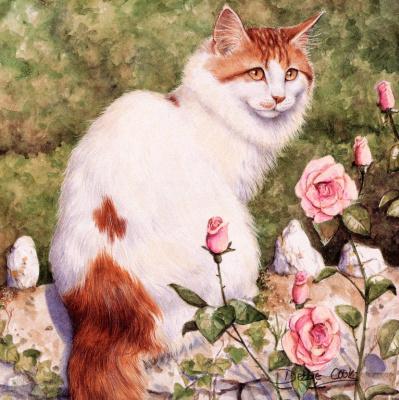 Дебби Кук. Кот и розовые розы