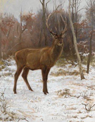 Rose Bonhur. Nastorozhilsya deer in winter forest