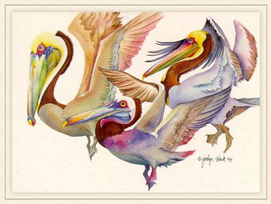Коричневые пеликаны