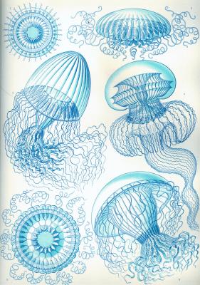 "Ernst Heinrich Haeckel. Leptomedusa ""The beauty of form in nature"""